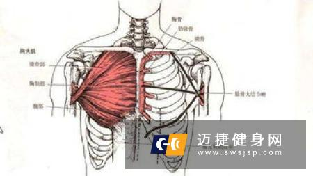 徒手锻炼胸大肌方法 在家也能练胸大肌