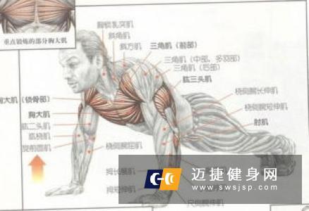如何锻炼胸大肌 这几招轻松练胸大肌