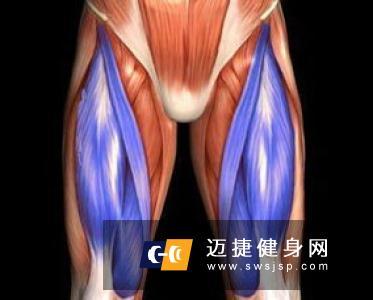 臀部肌肉分为哪些吗?臀大肌的五种锻炼方法